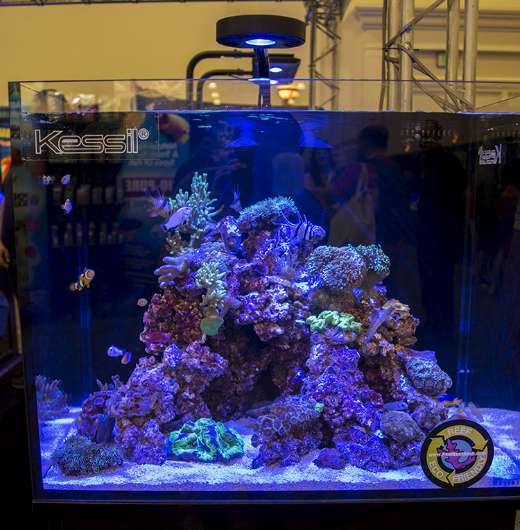 One of the display tanks at Kessil's booth