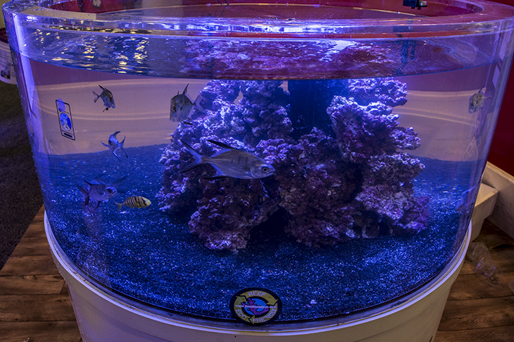 This large display aquarium by ProAquatix features their captive-bred Lookdowns, Palometa, and Golden Trevally