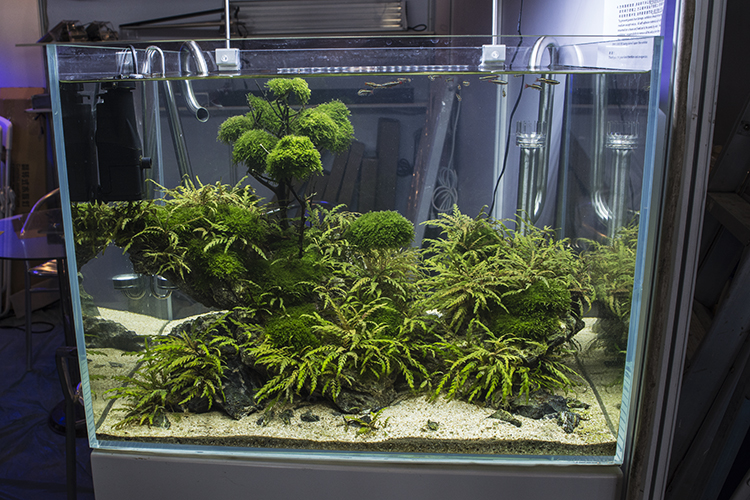 Many exhibitors incorporated beautifully planted and aquascaped tanks into their displays