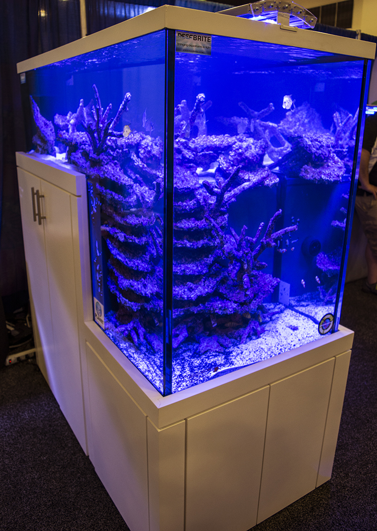 Planet Aquarium's massive dropoff aquarium is a creative aquascaper's dream tank