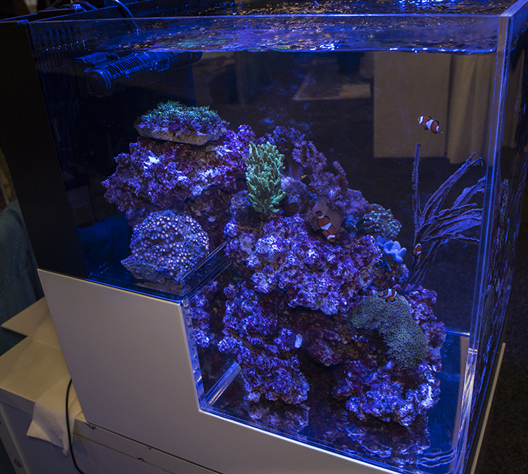 Dropoff-style tanks like this one at the Digital Aquatics booth were a popular display at this year's MACNA