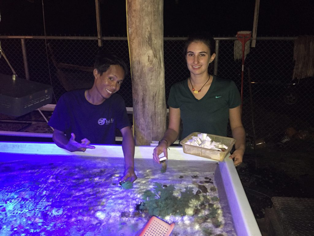 Graduate MASNA scholarship winner, Liz, at Biota Aquaculture Palau, February 2016<br /> Marine Ornamental Aquaculture Internship, prepping green Nephthea soft coral for shipment<br /> with Bradley Nareto (live feeds and larval care expert).