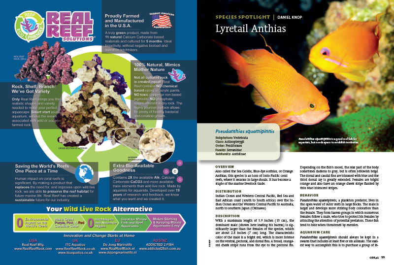 The beautifuil Lyretail Anthias, Pseudanthias squamipinnis, steals the Species Spotlight in this informative article by Daniel Knop.