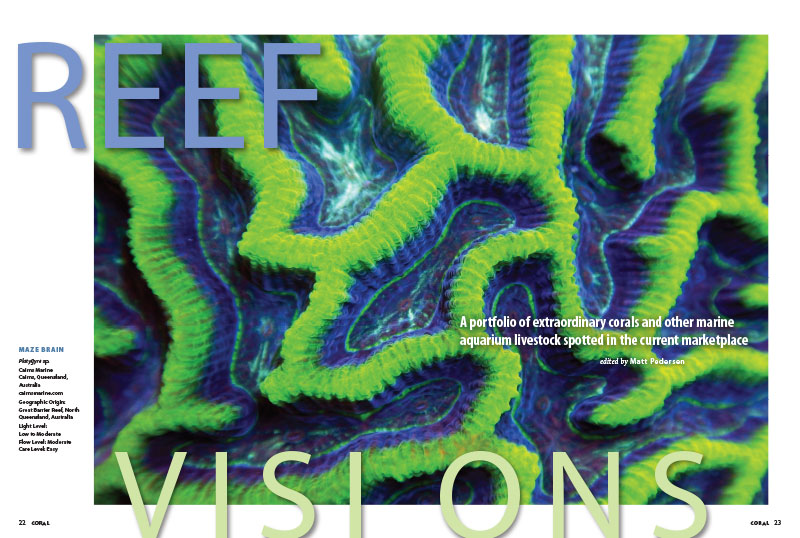 The newest Reef Visions offers a best-of-the-best selection of reef aquarium livestock choices from collectors, exporters, importers and retailers.