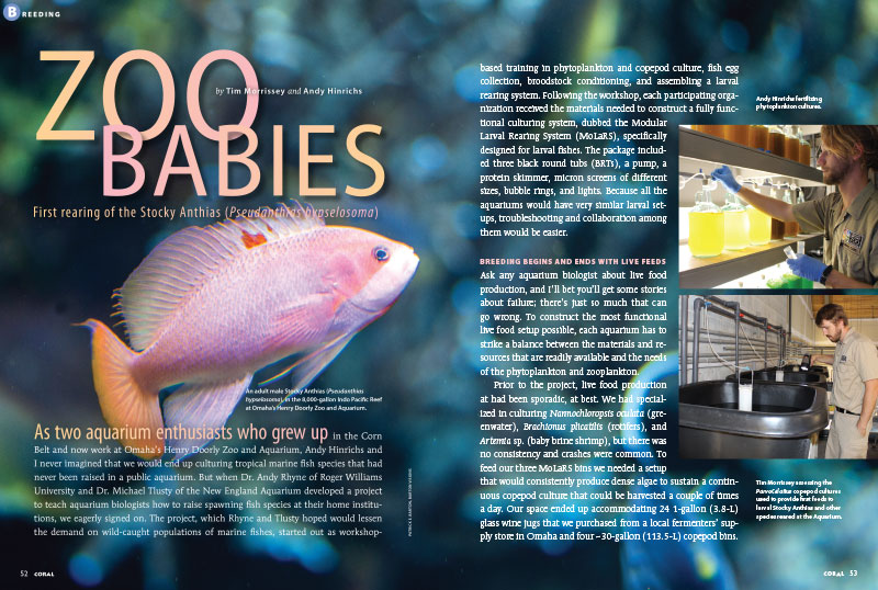 How did Tim Morrissey and Andy Hinrichs, two aquarists from the Corn Belt, wind up being responsible for only the second successful captive-breeding of an Anthias species in the world, at Omaha's Henry Doorly Zoo and Aquarium? Learn everything in this exclusive CORAL Magazine tell-all!