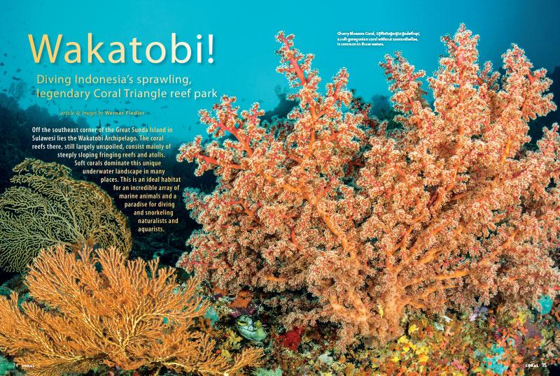 Coral Magazine New Issue Breeding Milestones Inside Lo