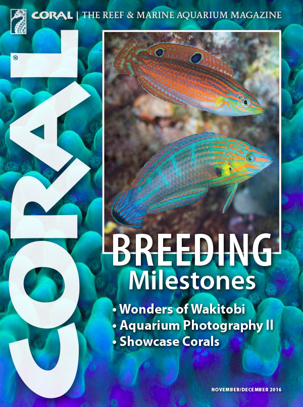 The cover of CORAL Magazine Volume 13, Issue 6 – Breeding Milestones – November/December 2016