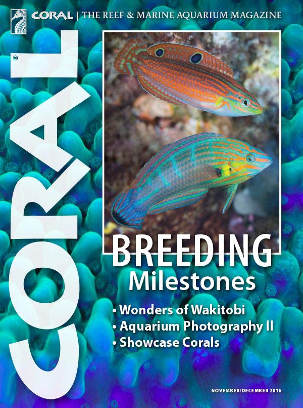 The cover of CORAL Magazine Volume 13, Issue 6 – Breeding Milestones – November/December 2016