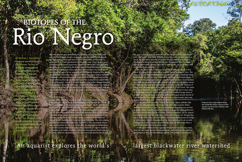 """The blackwater tributaries of the Amazon watershed have always held a special fascination—and having now had the good fortune to visit Brazil's Rio Negro several times, I can certainly count myself among the lucky few who have realized the dream of seeing the fishes I keep in the wild."" - Author Michael J. Tuccinardi, in ""Biotopes of the Rio Negro"""