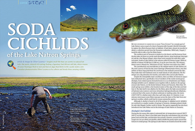 Oliver Lucanus introduces us to Soda Cichlids of the Lake Natron Springs, small fish that can survive in natural hot tubs!