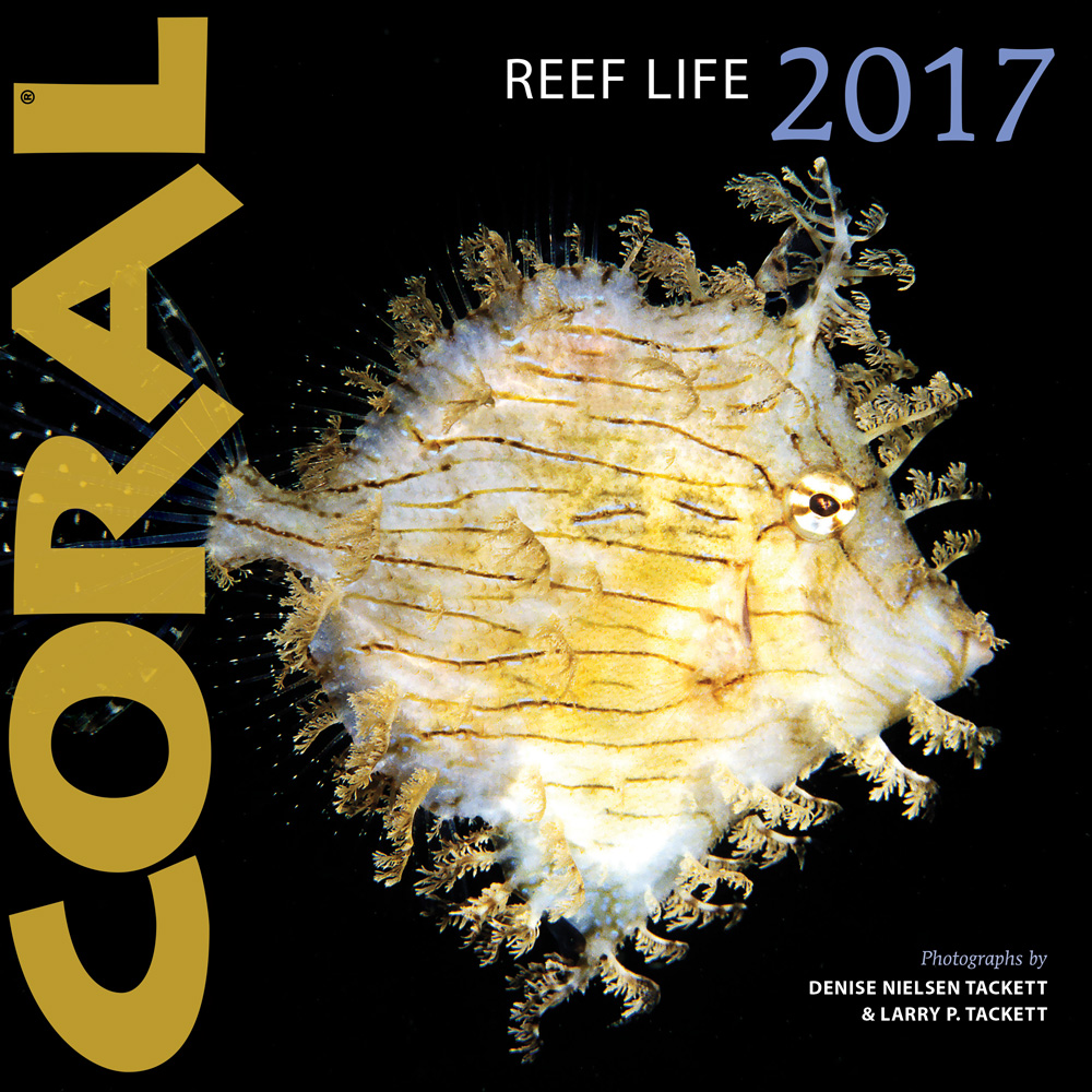 The 2017 Reef Life Calendar from CORAL Magazine is available now! Know this species? (See bottom of page for the identification.)