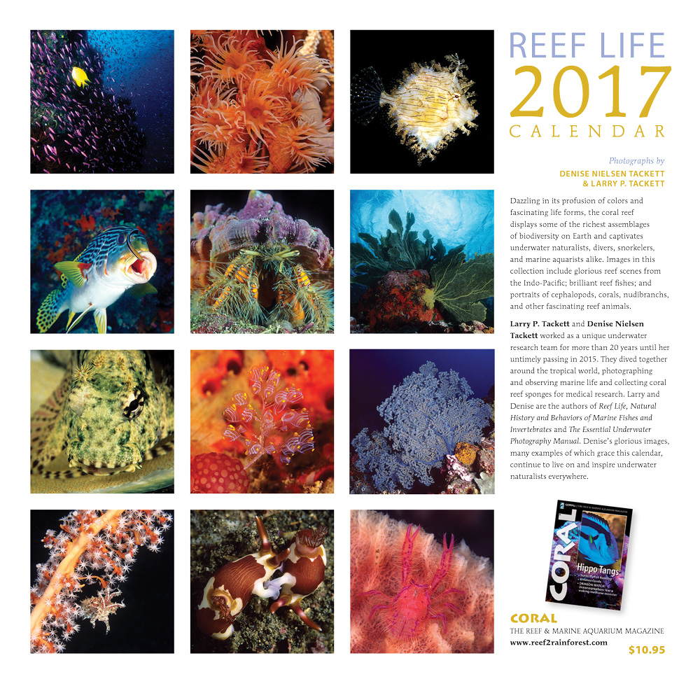 Take a look at all that awaits you in 2017's Reef Life Calendar. Click to order now!