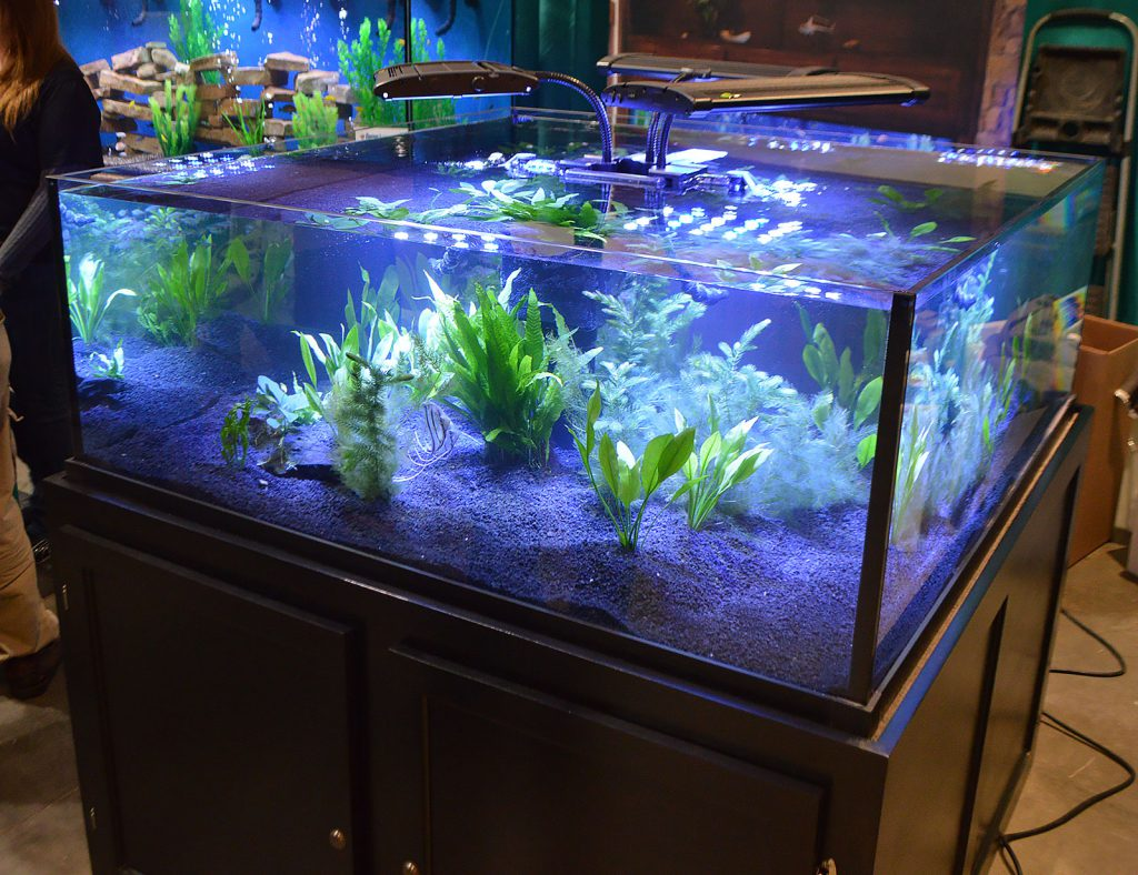 Plants and Angelfish fill this low and wide aquarium on display by Custom Aquariums.