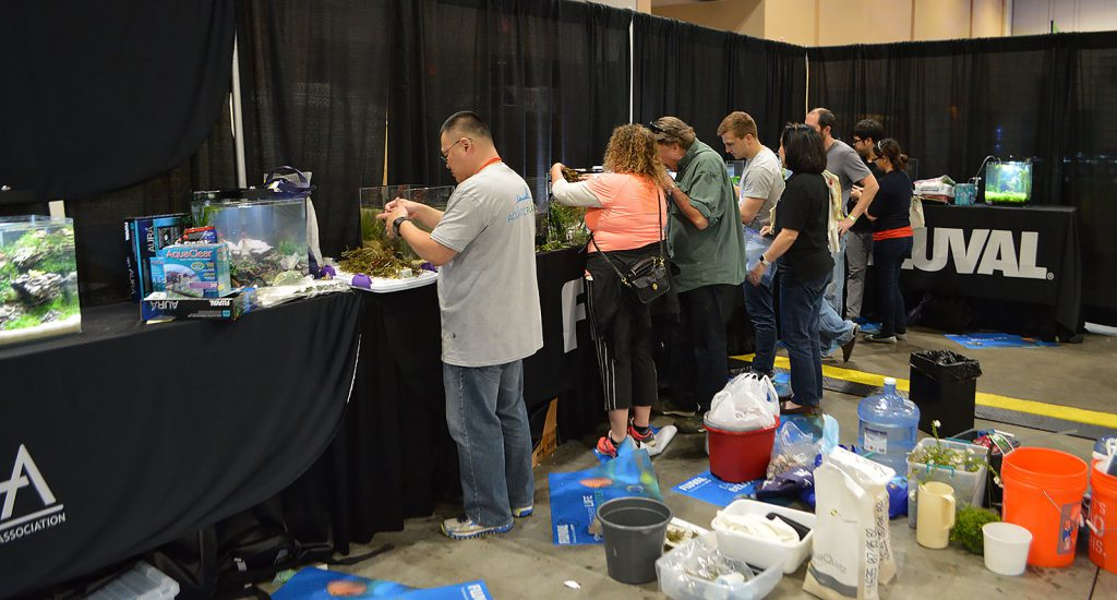 Aquascaping contestants work furiously to get their creations set up.