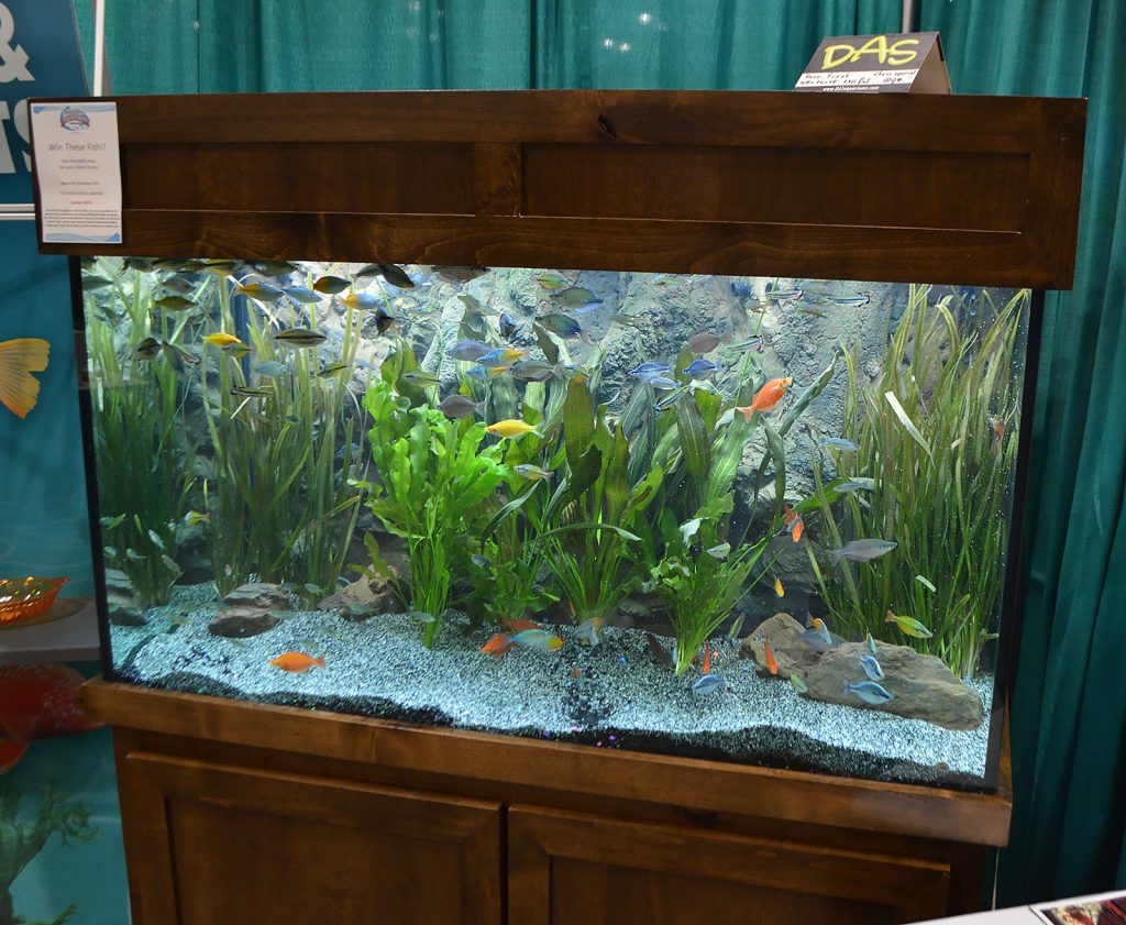 Plants and Rainbowfish on display by the Florida Tropical Fish Farmers Association (FTFFA).