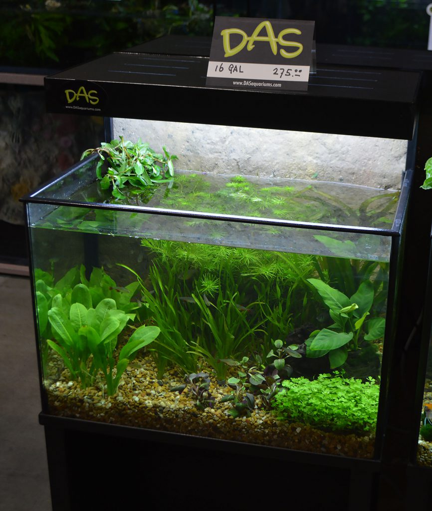 Dutch Aquarium Systems (DAS) had many aquariums on display, both empty and filled to the brim with livestock. Here's a look at the first of several.
