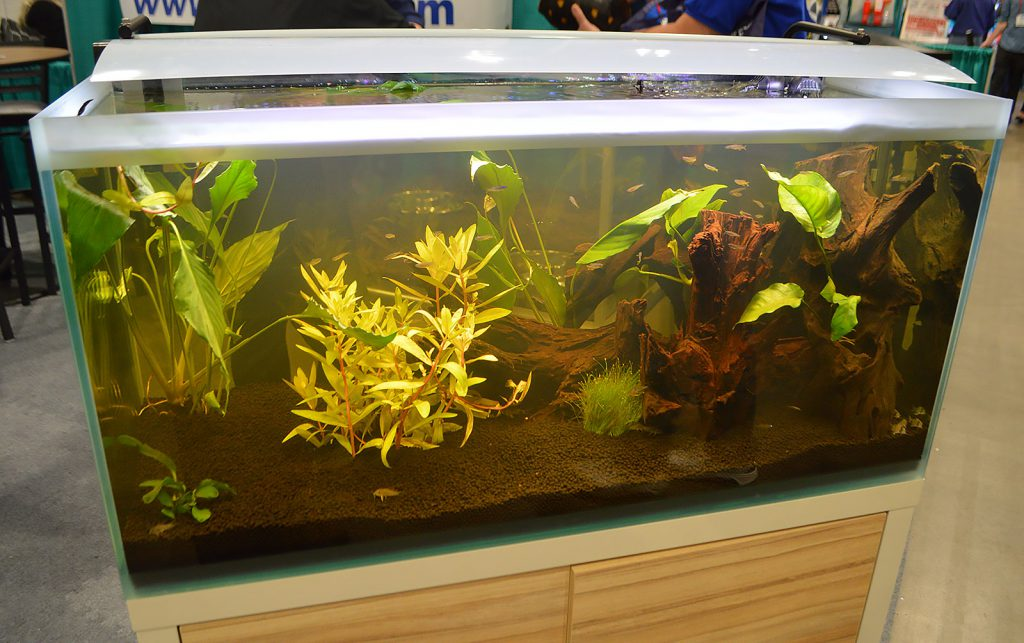 Plants and fish on display by wholesaler Apet, Inc.