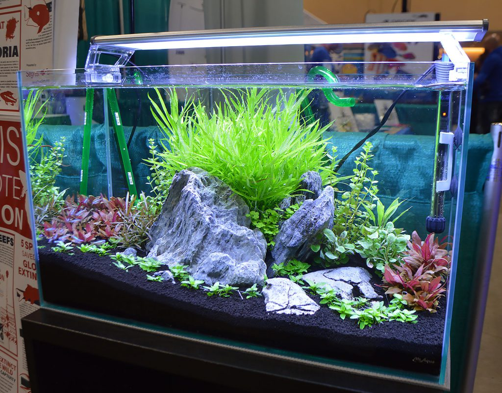 Segrest Farm's planted aquarium featured the small freshwater pipefish Enneacampus ansorgii.