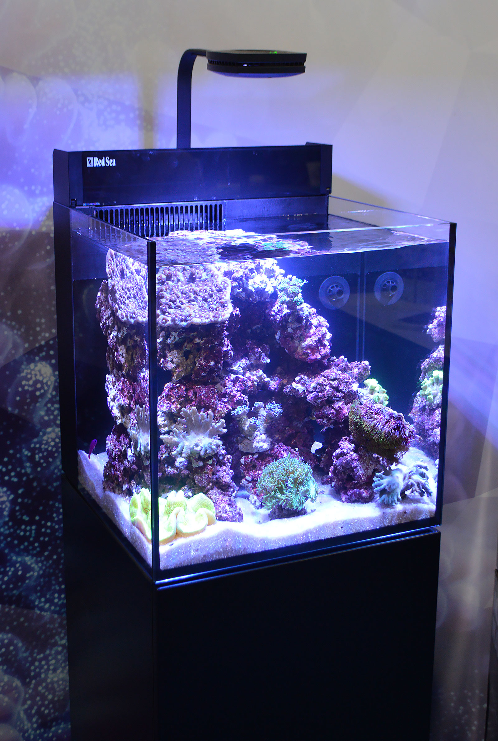 how to setup a saltwater fish tank