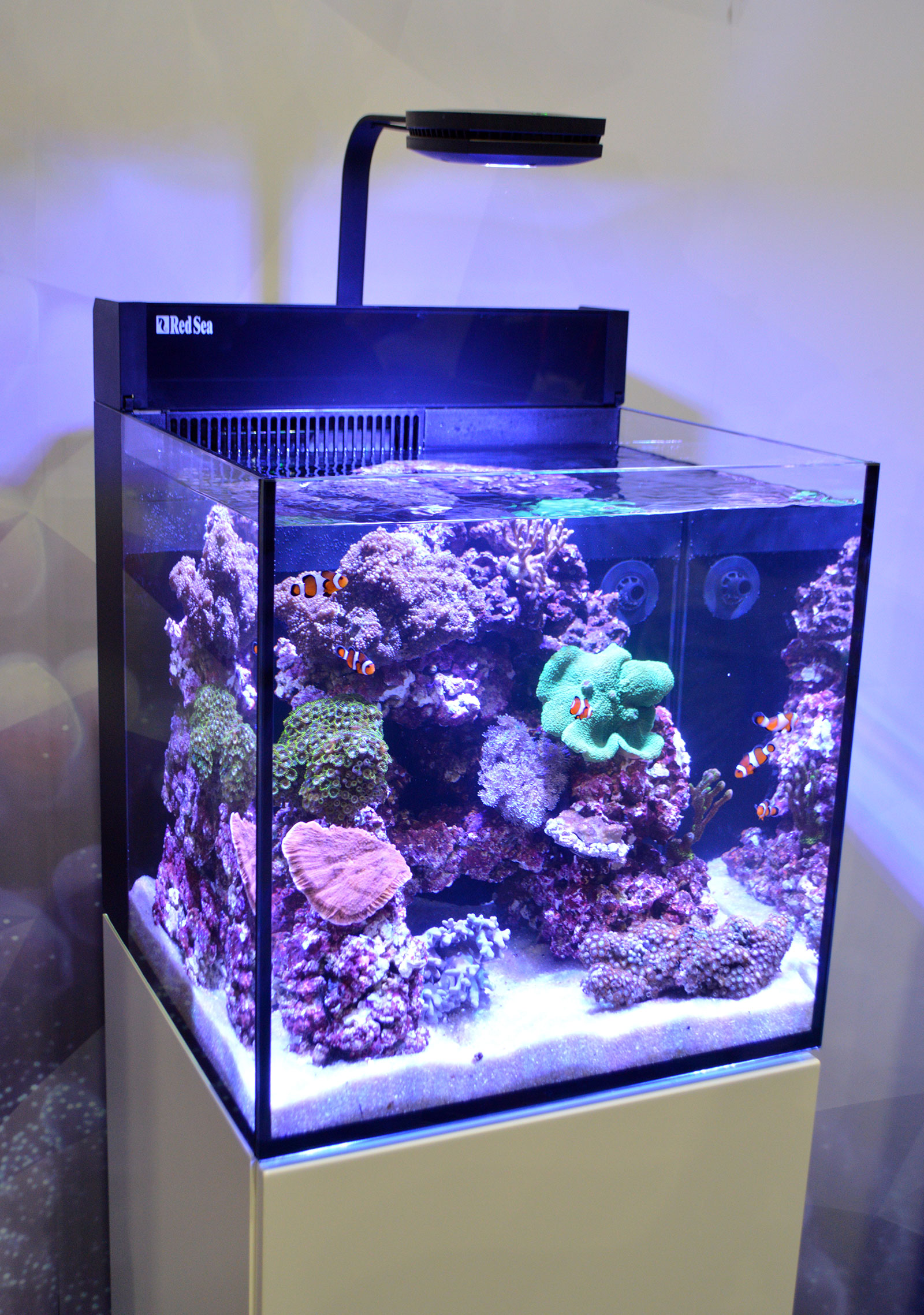 Saltwater tanks of the aquatic experience 2016 for Saltwater fish for small tank