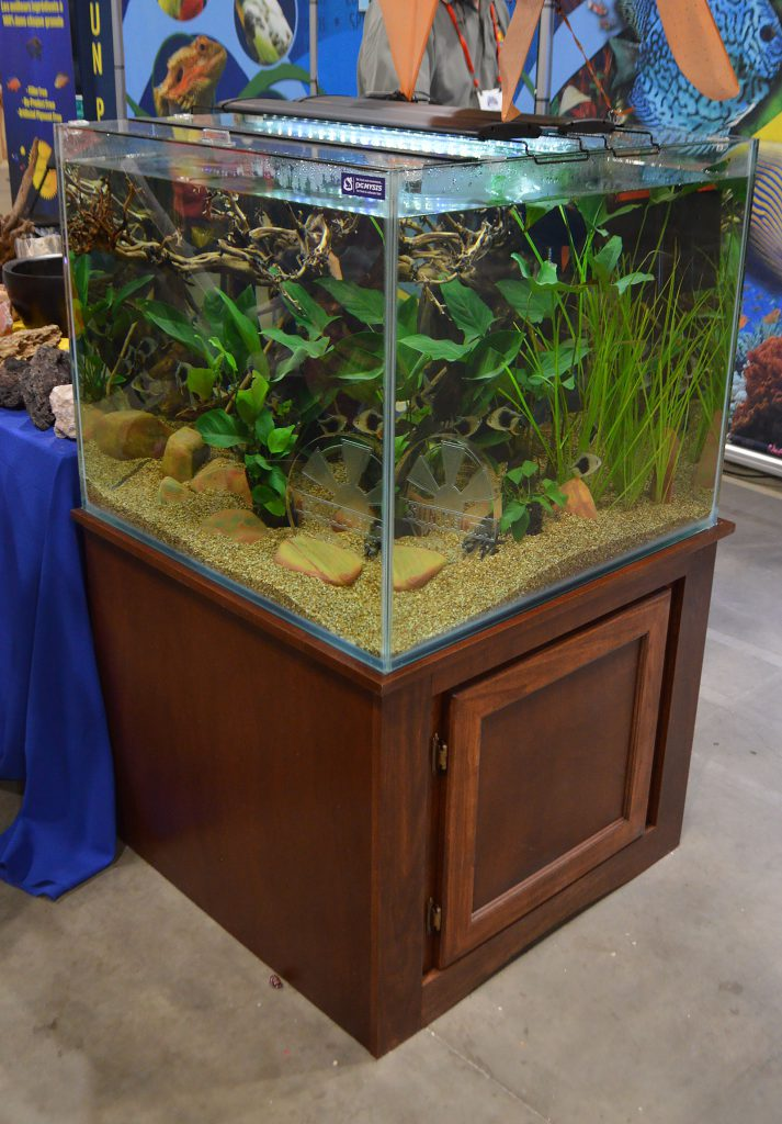Livestock wholesaler Sunpet had a stunning shoal of Blackberry Silver Dollars roaming around this large cube aquarium.