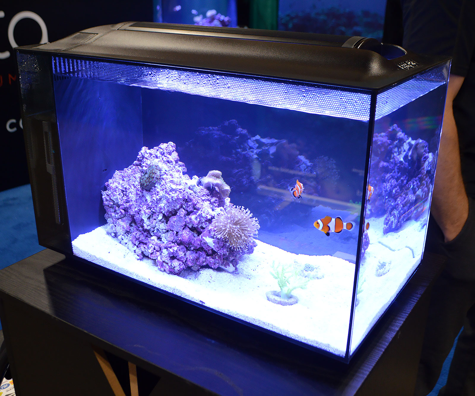 Saltwater tanks of the aquatic experience 2016 for Saltwater fish tank