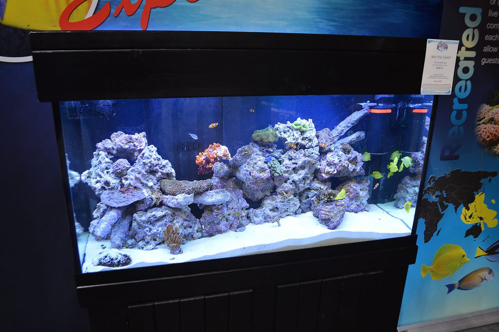 The main marine/reef/saltwater display that attendees saw upon entering the Aquatic Experience - Chicago.