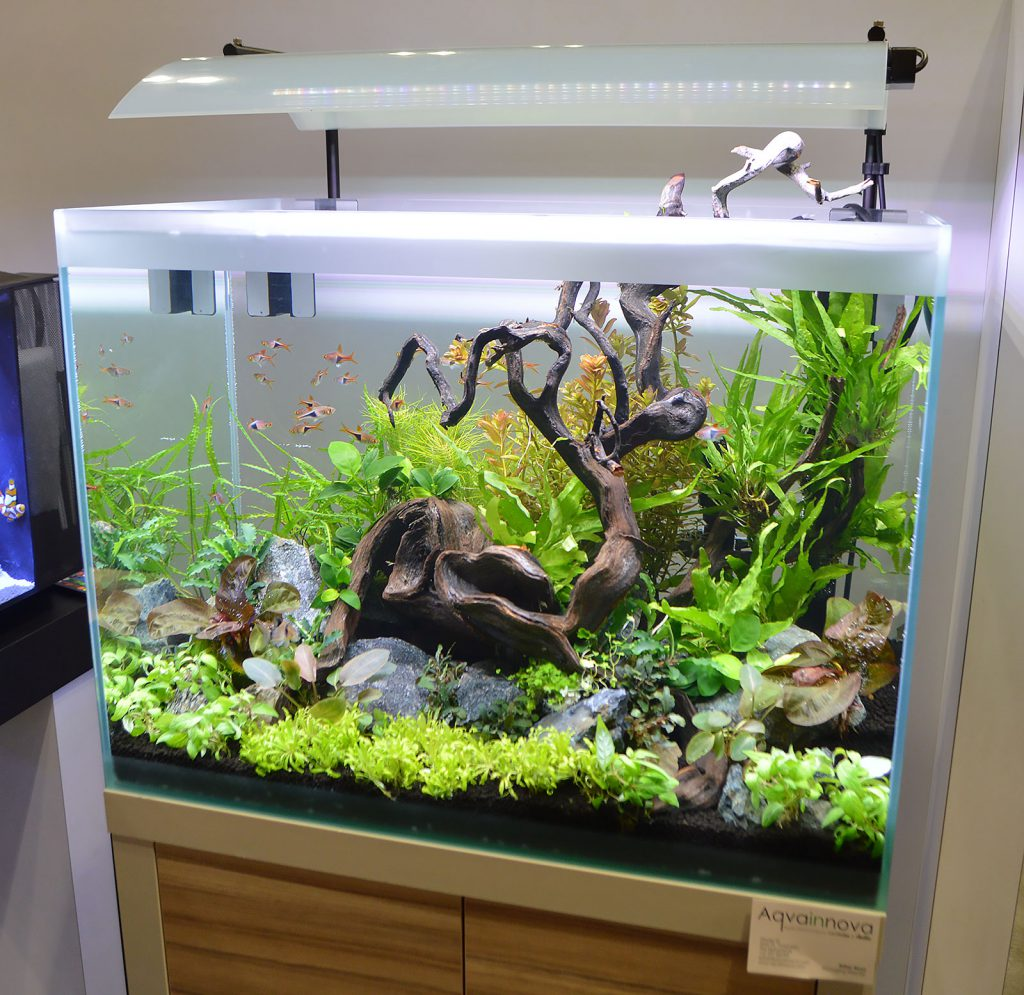 Fluval's floorspace offered up several beautiful planted aquariums. Update - we've learned that Karen Randall of the AGA can be credited with this aquascape's design.