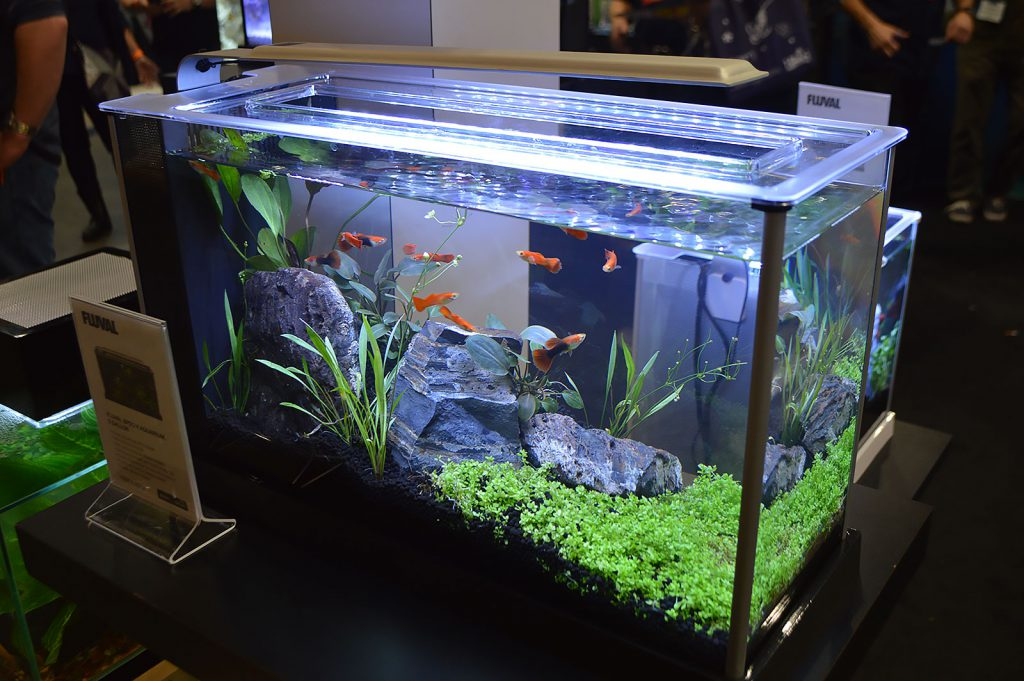 The Fluval Spec V display featured fancy guppies.