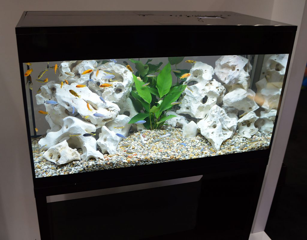 Assorted Lake Malawi mbuna add active color to this aquarium displayed by Fluval.