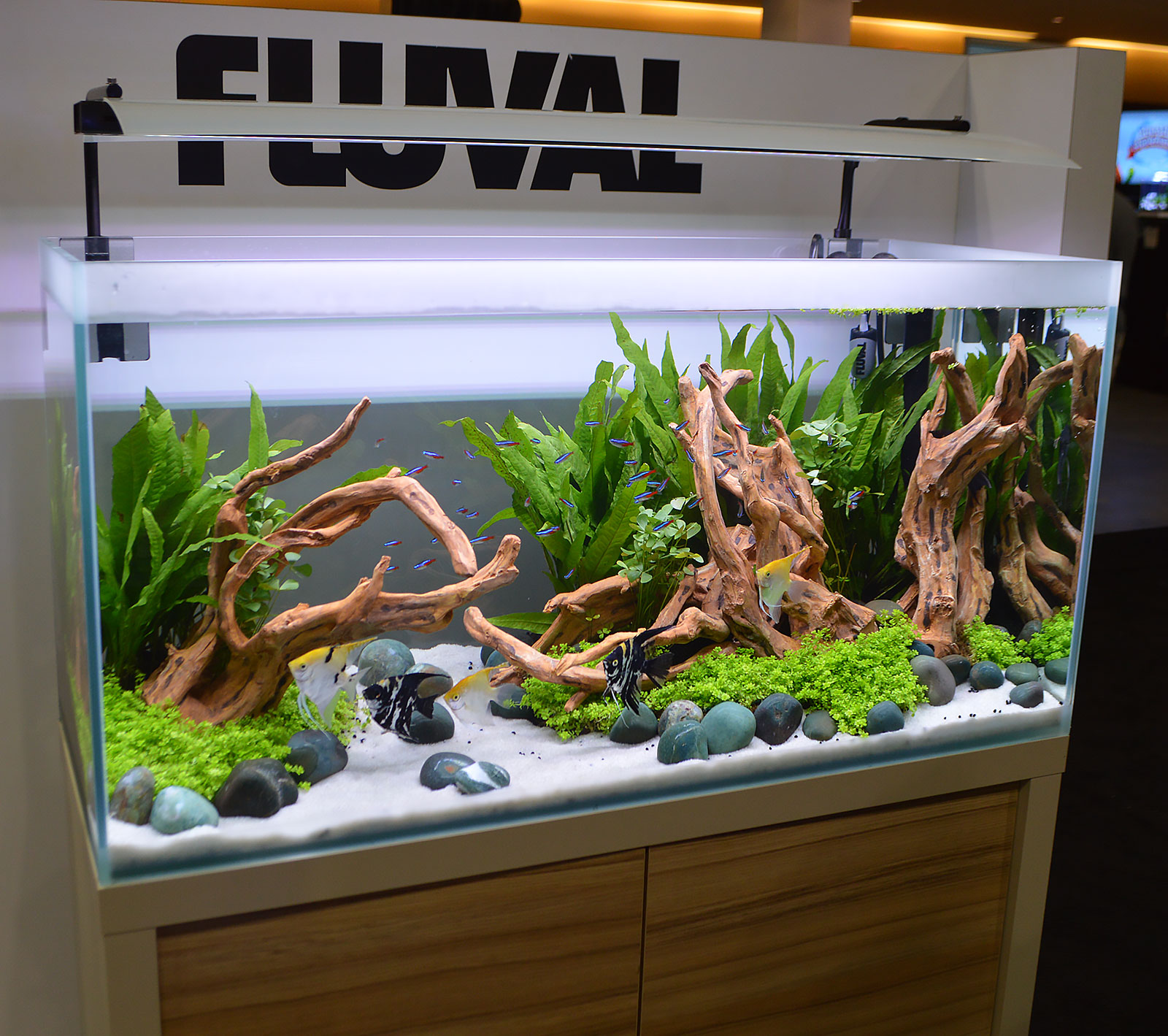 Another Strongly Aquascaped Planted Aquarium Shown Off By Fluval; Note That  This Is The Same