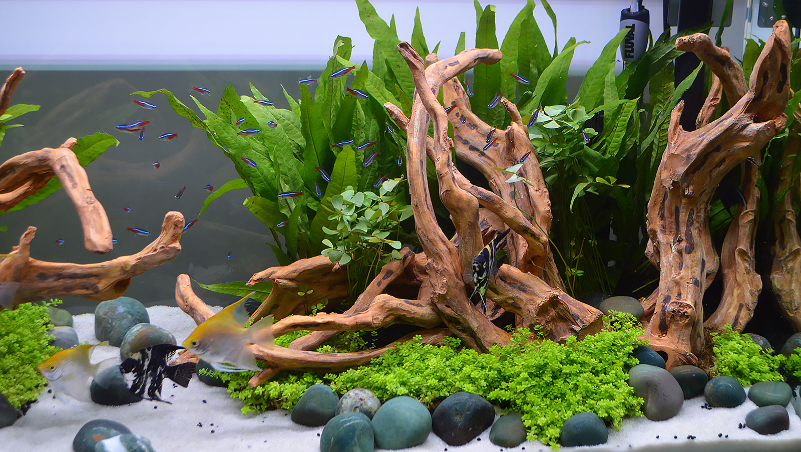 Planted Tanks Were Everywhere At The Aquatic Experience   Chicago, 2016.  You Can See
