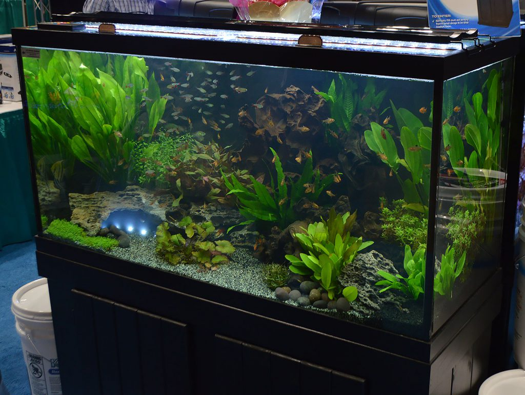 A large planted aquarium at the front of the Aqueon floorspace, this one set up by Old Orchard Aquarium.