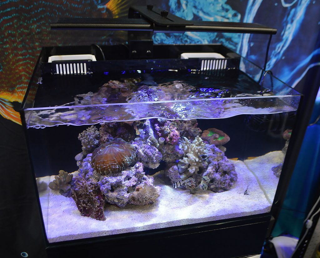 Cobalt debuted their new C-View line of glass all-in-one aquariums at the Aquatic Experience - Chicago.