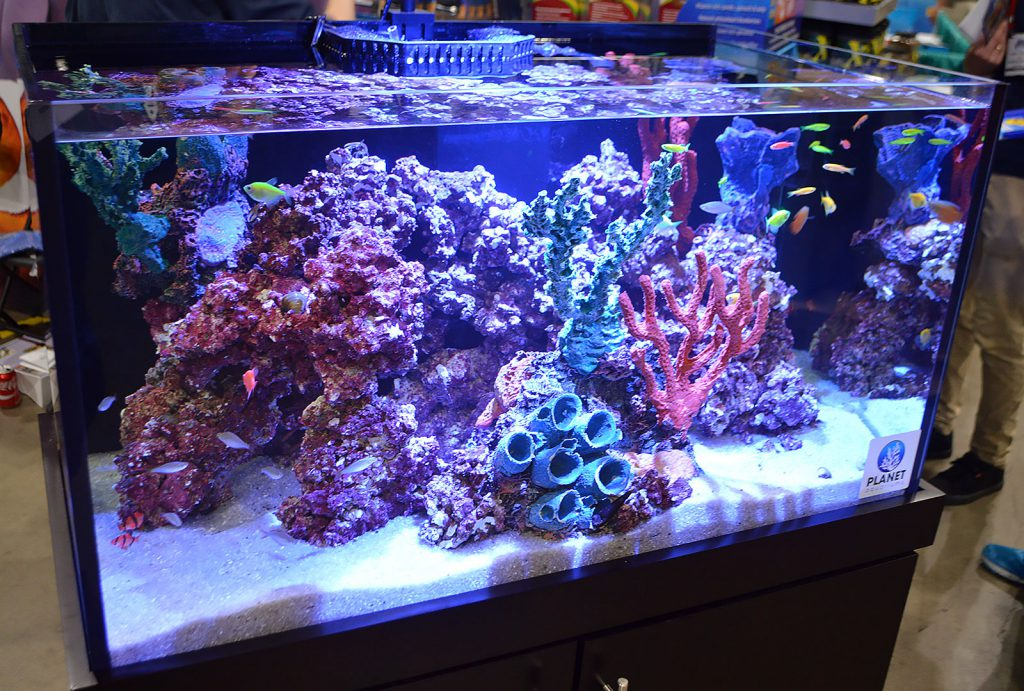 "Freshwater fish cavort among artificial corals as Aquarium Adventure shows off a classic example of the ""I want a saltwater tank, without the actual headaches of a saltwater tank,"" type of aquarium."