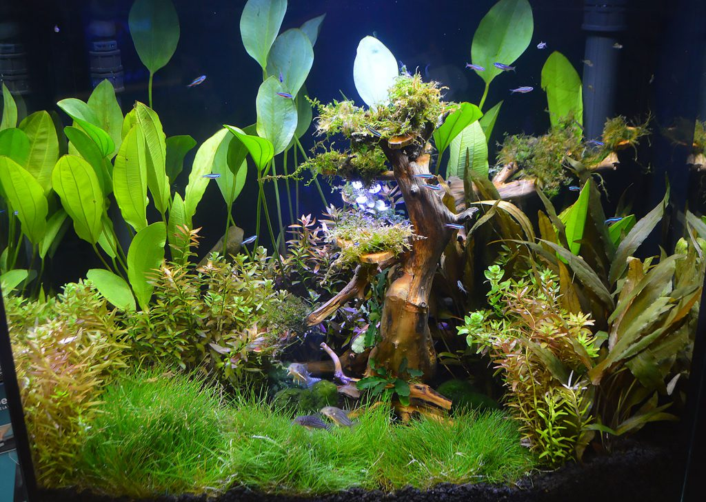 A beautiful aquascape inside this Kithros aquarium only reinforces the high-end aquarium that housed it.