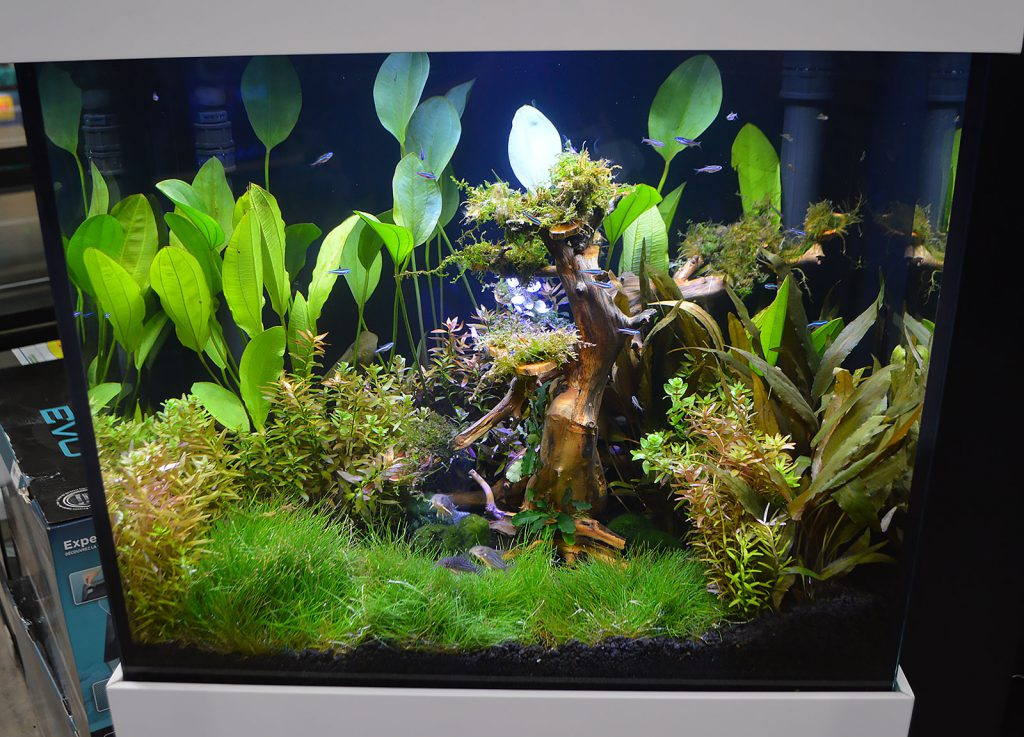 "For those who feel a certain reaction to the ""fake coral, freshwater fish"" aesthetic, Aquarium Adventure also presented this beautiful high-end planted tank in a Kithros model IFALOS aquarium from Elive. See more of this tank in our detailed look at the Kithros aquarium."