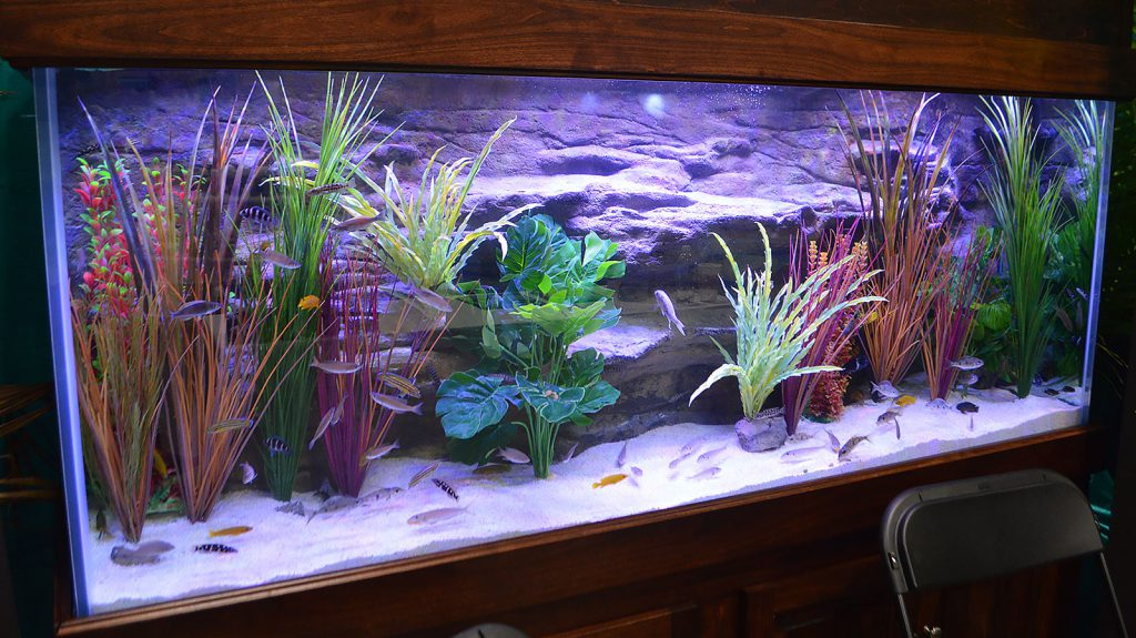 Florida Exotic Fish Sales and Xtreme Aquatic Foods presented a display featuring Tanganyikan Cichlids.