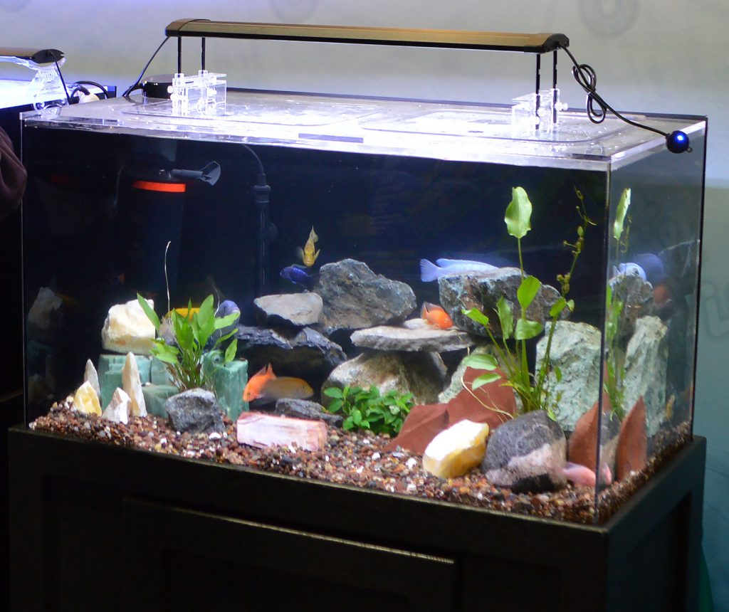 The Finnex both featured a rocky tank of African cichlids.