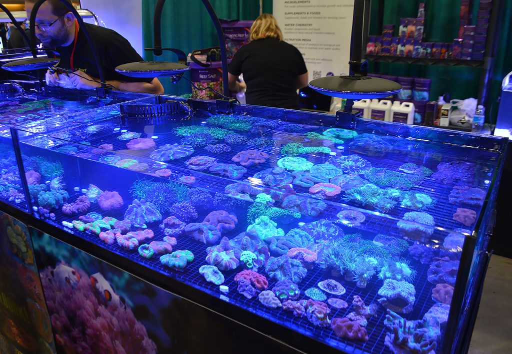 More coral sale offerings, these by Wojtek's Reef.