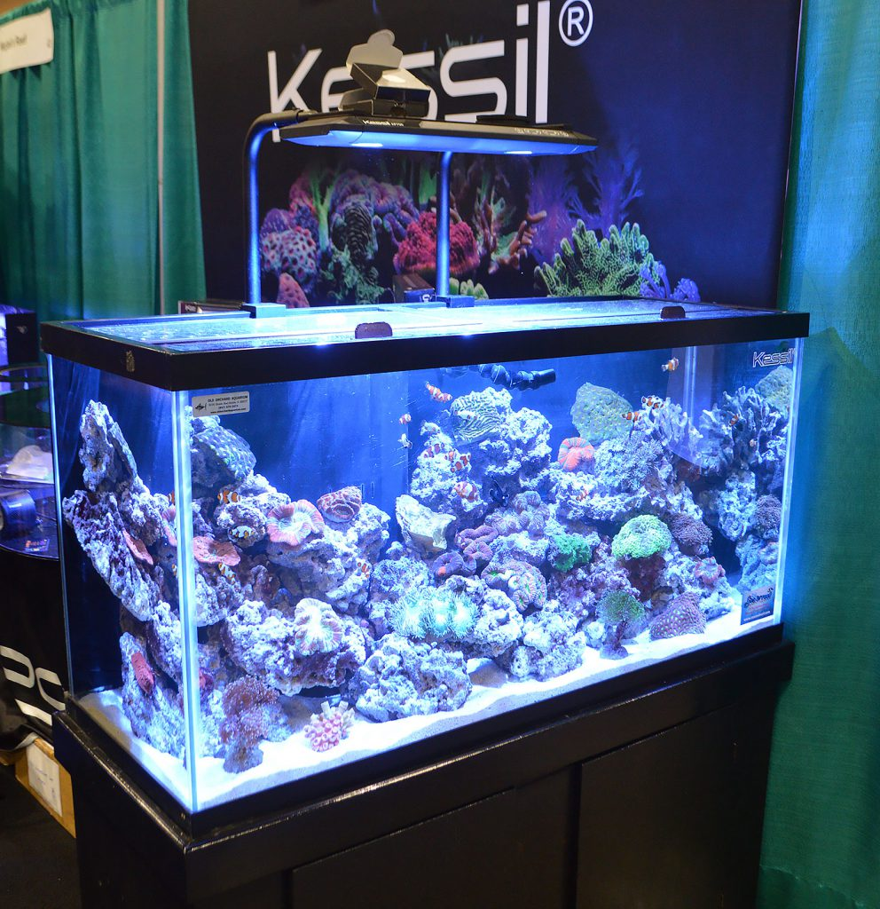The larger reef aquarium installation in the Kessil booth; the display was installed by Old Orchard Aquariums and prominently featured captive-bred fish from Sea & Reef Aquaculture.