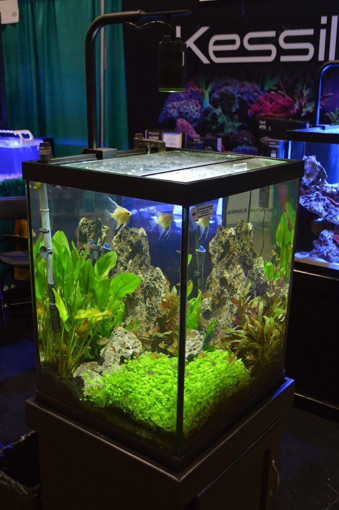 Kessil, an LED lighting company probably more familiar to reef aquarium hobbyists, offered up this planted aquarium featuring Angelfish and Tetras.
