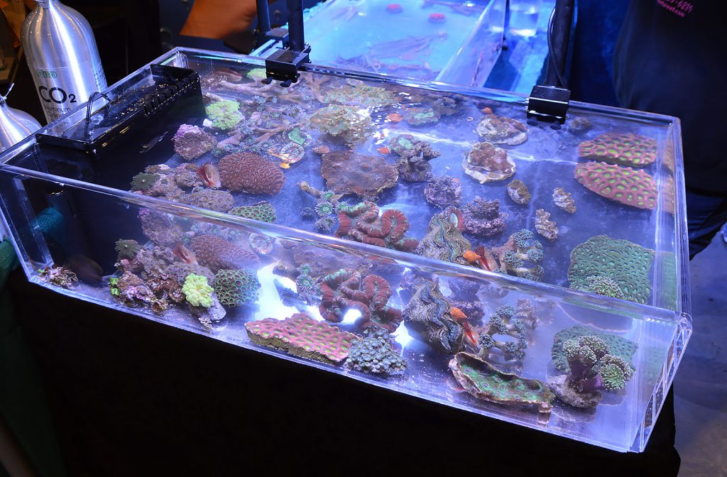 More marine aquarium livestock offerings; this was one of the aquariums at Beef's Reef.
