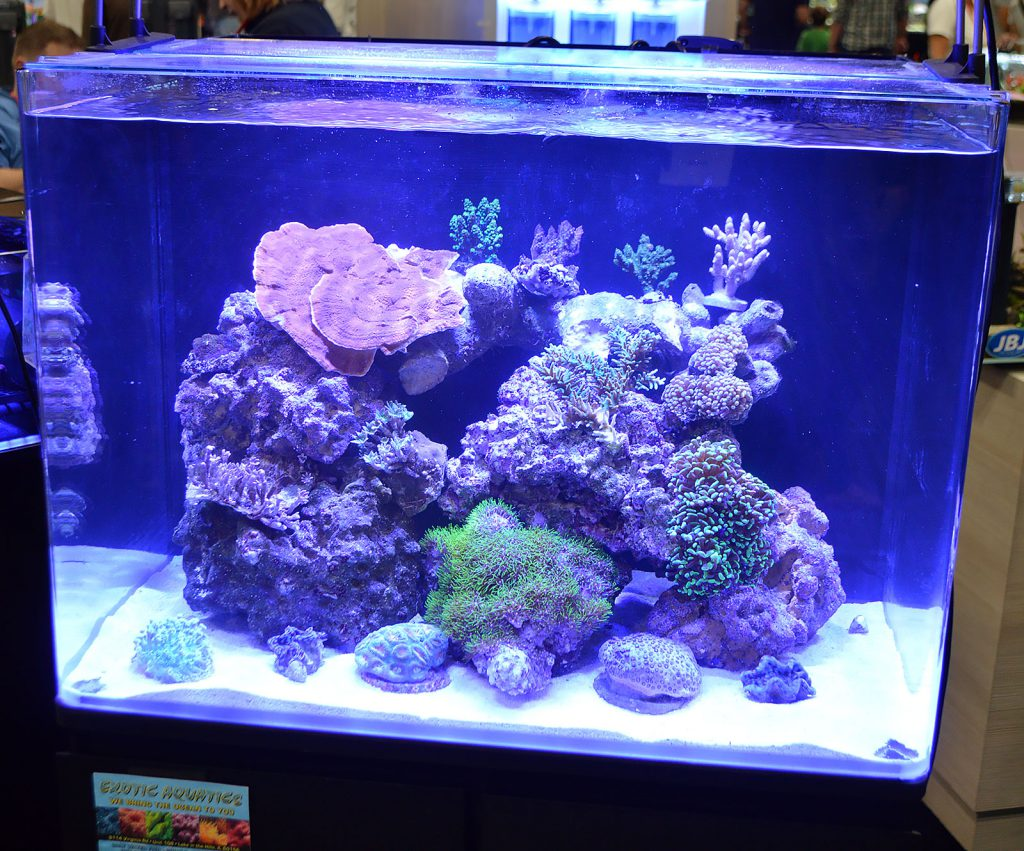 JBJ's large booth offered a few marine aquariums, including this small reef put together with Exotic Aquatics.