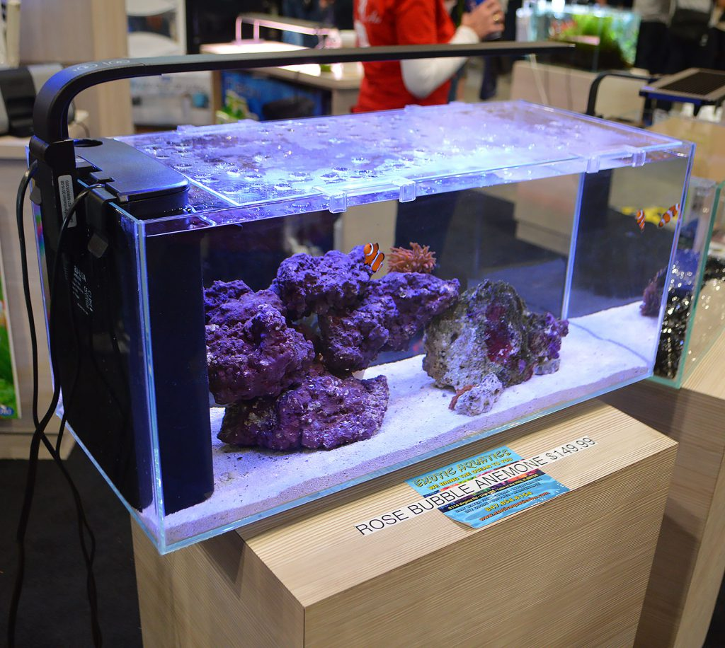 This peninsula-style all-in-one aquarium, JBJ's Rimless Desktop 10G Flat Panel, was also on display by JBJ.