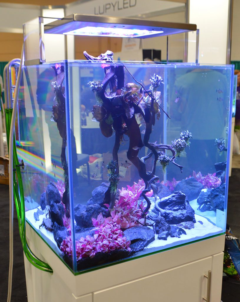 Aqvainnova and LUPYLED shared a joint display and had well-known aquascapers Luis Navarro, Oliver Knott, and the Senske Brothers (from Aquarium Design Group) on hand to talk with attendees and provide real-time aquascaping demonstrations in the booths.