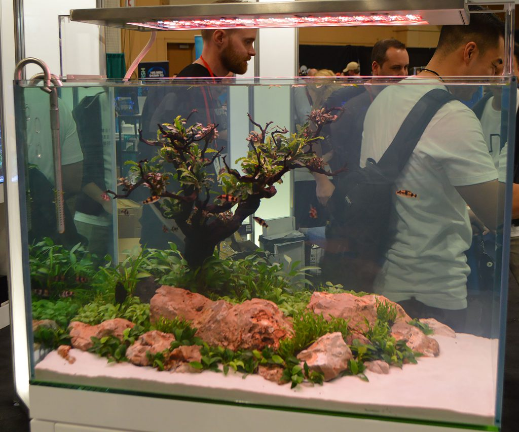 One of two tanks designed by Jeff Senske from ADG, this one featuring a shoal of Melon Barbs, Haludaria fasciata.