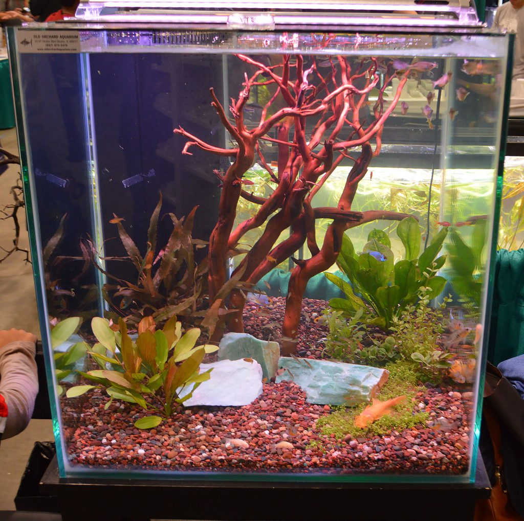 Another tank at the Aquatropic booth, this one set up by Old Orchard Aquarium.
