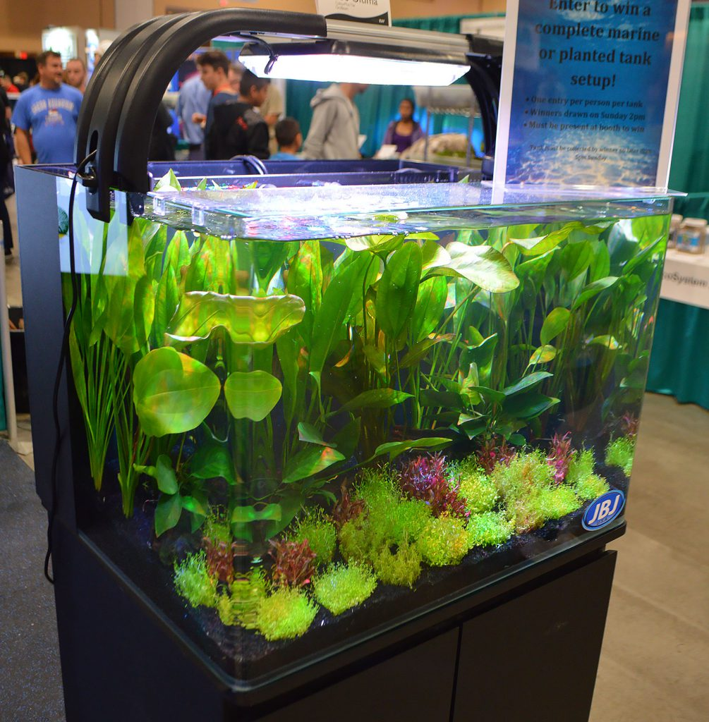 A somewhat formal-looking heavily planted aquarium was on display at the Pecan Grove Solutions booth.