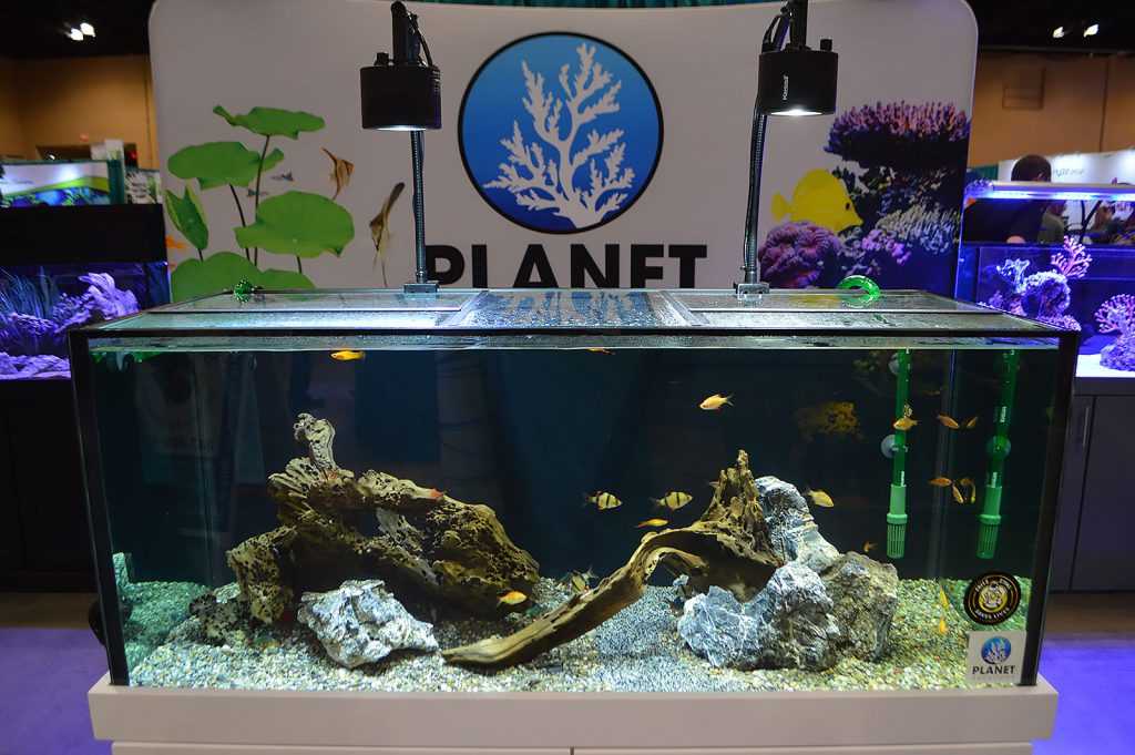 Planet Aquariums offered a respite from the onslaught of green with this hardscape.